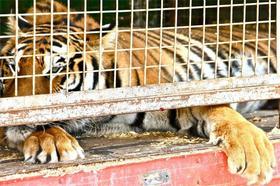 Dos circos dejan de usar animales en sus espectáculos por el aumento de municipios que prohíben su uso