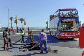 La realidad de las galeras de caballos en Palma de Mallorca