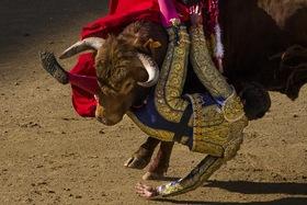 Entra en vigor la ley que prohíbe torturar y matar toros en Baleares