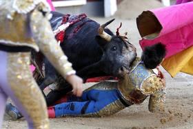 Bullfighting fall 63% in Spain since 2007