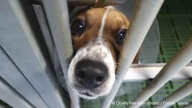 ONGs denunciamos que la Comunidad de Madrid oculta información sobre los 880 animales en Vivotecnia