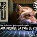 Golpe a la industria peletera: ¡Holanda prohíbe la cría de visones!