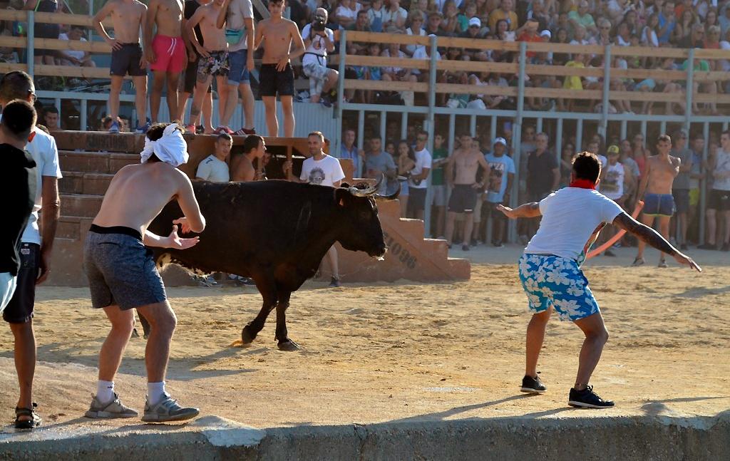 Chased bulls